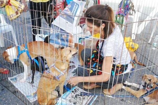 Shopping Metrô Itaquera promove 1ª feira de adoção de animais