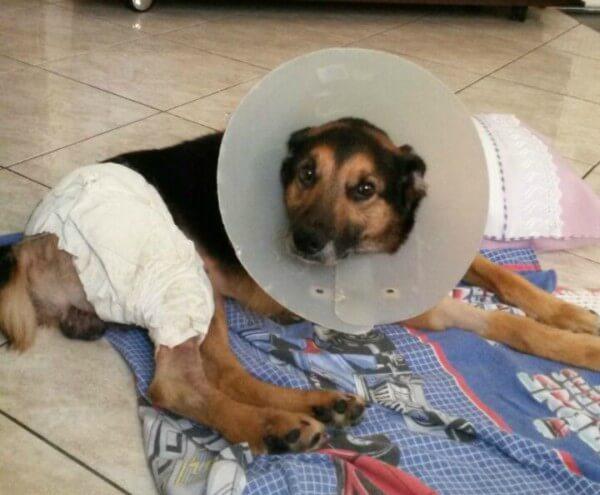 ShirleyCezarino teve um gasto de quatro mil reais no tratamento e cirurgia do Hori e procura novo dono